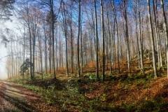 IMG_20201107_114425-Panorama