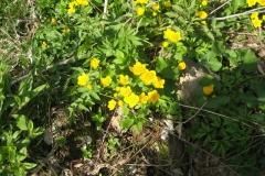Květena